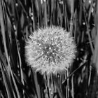 black and white nature by leras