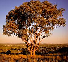 Sunset - tree - Wagga Wagga by naemick