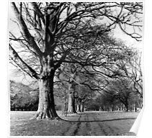 Tree Lined Avenue, Phoenix Park, Dublin Poster