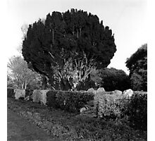 The Peoples Garden, Phoenix Park, Dublin Photographic Print