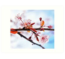 Flowering Purple Sand Cherry Tree Art Print