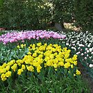 Trees and Tulips - Keukenhof Gardens by kathrynsgallery