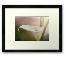 Lily, Calla. Framed Print
