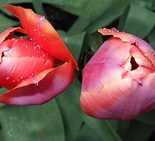 Dynamic Duo - Pretty Tulip Pair by MidnightMelody