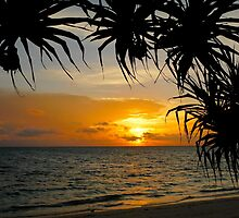 sunrise under the pandanus by supergold