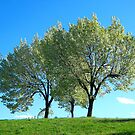 Spring trees, New York City  by Alberto  DeJesus