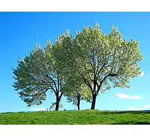 Spring trees, New York City  Photographic Print