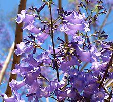 Purple on blue by ♥⊱ B. Randi Bailey