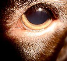 Dogs eye by HopefulHarrie