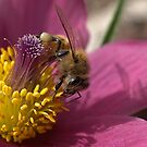 Bee in Bright Pink by Betsy  Seeton