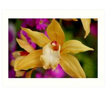 Orchid floater Art Print