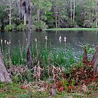 Cattails Along The Lake by Cynthia48