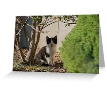 I am just going to sit here Greeting Card