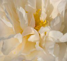 White Peony by Rod J Wood