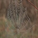 Spider web by ffuller