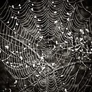 What a tangled web we weave... by Marcia Rubin