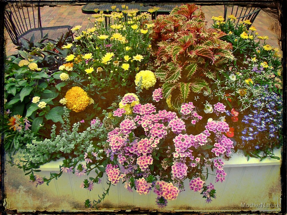 The Patio at Coffee O - Falmouth - Cape Cod - Massachusetts by MotherNature