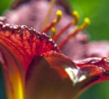 Red Day Lily in a Garden Sticker