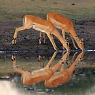 Seeing double by Explorations Africa Dan MacKenzie