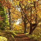 Autumn path  by yampy