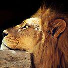Resting King by Josie Eldred