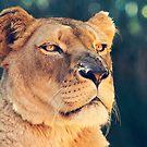Proud Lioness by Josie Eldred