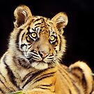 Young Stripes by Josie Eldred
