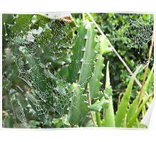 Webs, Webs Everywhere Poster