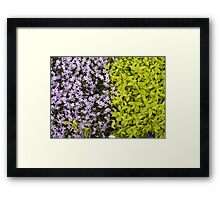 Mauve and Green Framed Print