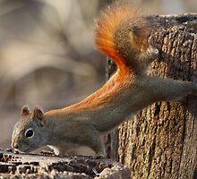 Squirrel-gymnast by Alinka