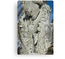 Well Weathered Birch Canvas Print