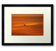 An early morning raptor Framed Print