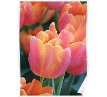 Light Orange Tulips Poster