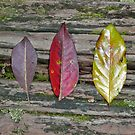 Six Forest Leaves, Finch Hatton Gorge in Queensland. by Leonie Mac Lean
