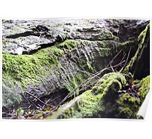 Light, Moss and Wood Poster