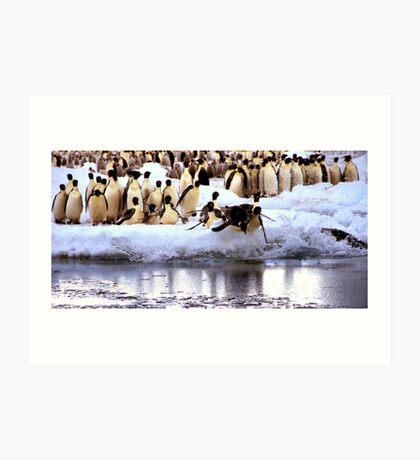 Emperor Penguins Going Fishing Art Print