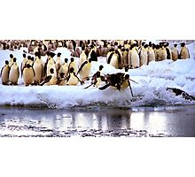 Emperor Penguins Going Fishing Photographic Print