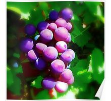 On The Vine  Poster