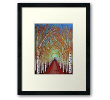 Autumn Birch trees Framed Print
