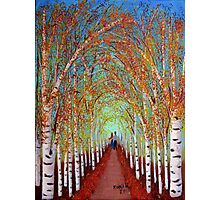 Autumn Birch trees Photographic Print