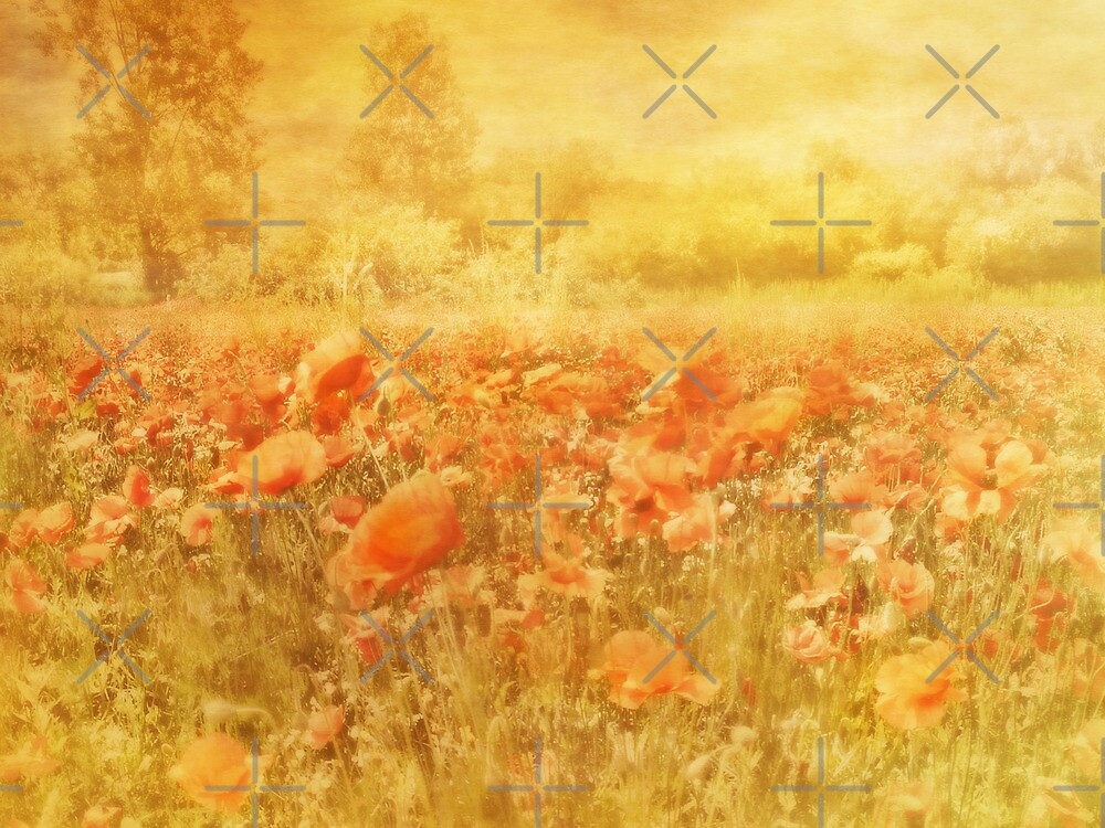 Field of Dreams by Catherine Hamilton-Veal  ©