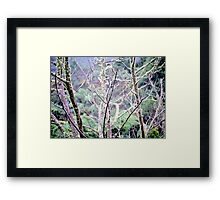 Moss and Trees Framed Print