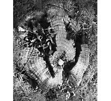 Tree trunk Photographic Print