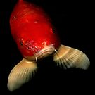 Aquatic Conversation by artisandelimage