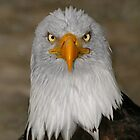 Eagle head by EagleHunter