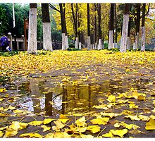 inQiuYu ginkgo biloba leaves after (  银杏林秋雨后的落叶 ) by WANGDABAO