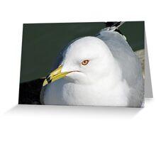 Daydreamer  Greeting Card