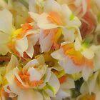 Dancing Daffodils by Laurel  Coleman