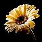 Floral Highlights by Aj Finan