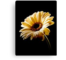 Floral Highlights Canvas Print